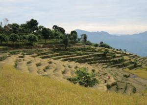 Manasalu Trekking Route Landscape